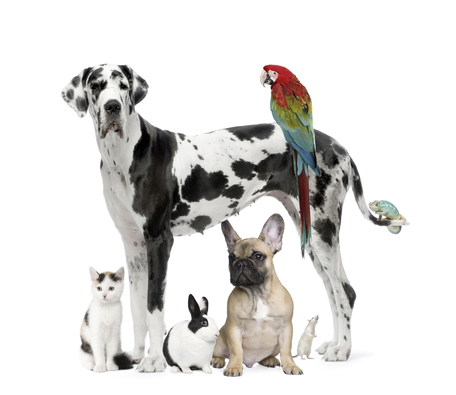 Top 8 Health Benefits of Owning a Pet